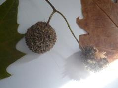 Chapitre 2: la diversité des êtres vivants (biodiversité)