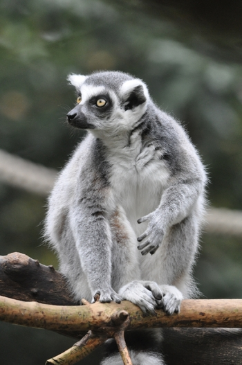 dierenpark amersfoort 2011 207