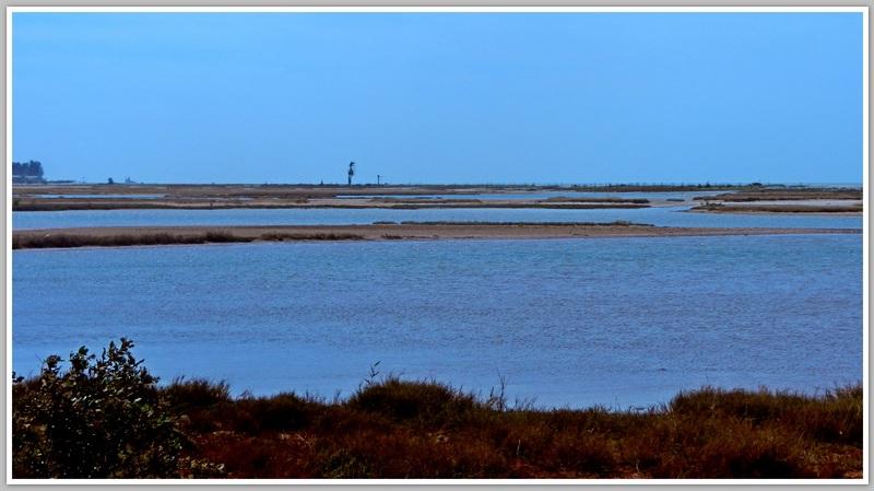 Pointe de Sangomar- DJIFFER