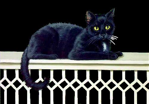 Állatok - Macskák