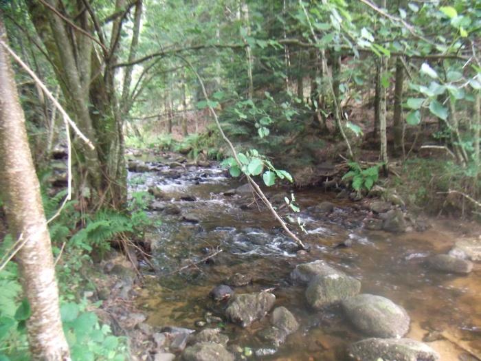 Rivières ambrées