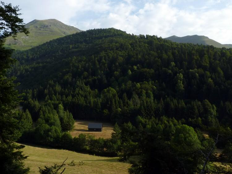 Vallée forestière
