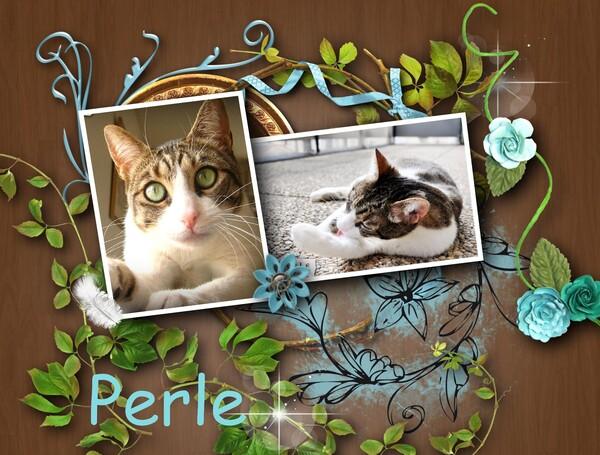 Bella, Perle et Petit Bambou dans les étoiles