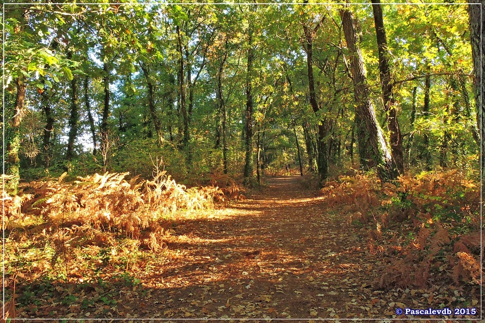 Automne au parc de la Chêneraie à la Hume - Octobre 2015 - 4/7