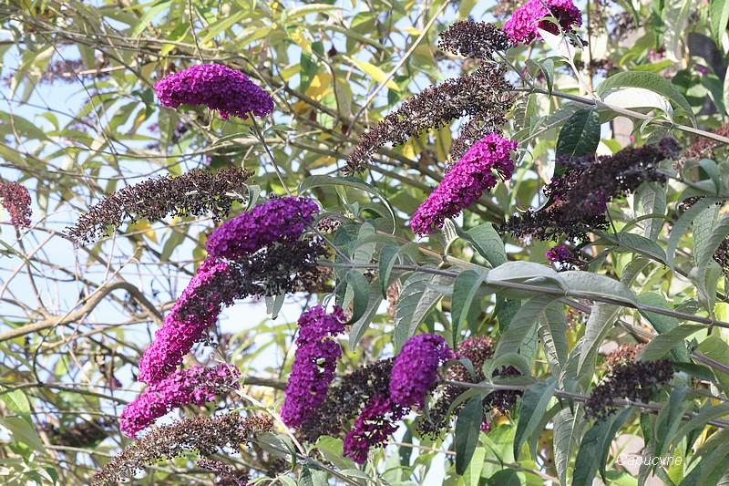 Les plantes envahissantes au jardin