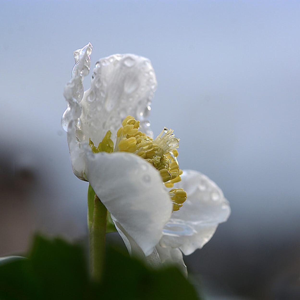 Fleurs-13-5358.jpg