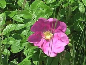 2008-07-06-19_08_000117.jpg