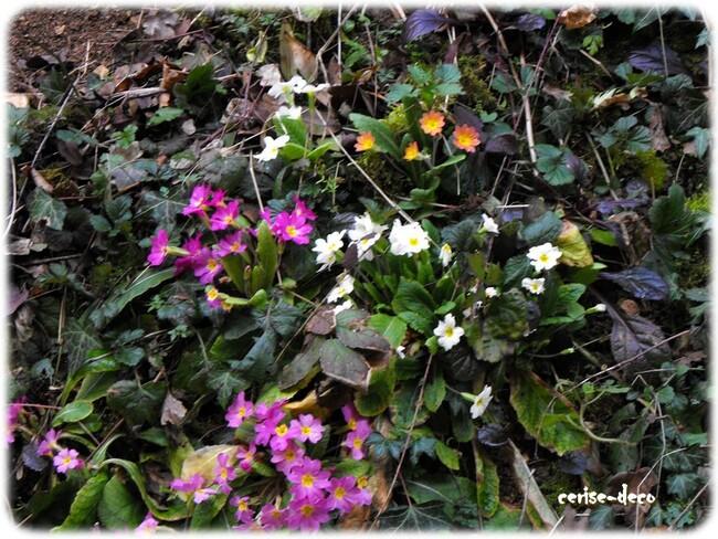 le jardin refleurit en bourgogne