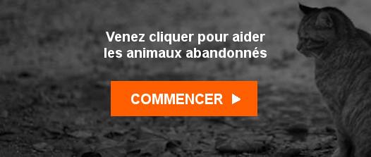Venez cliquer pour aider les animaux abandonnés - Commencer