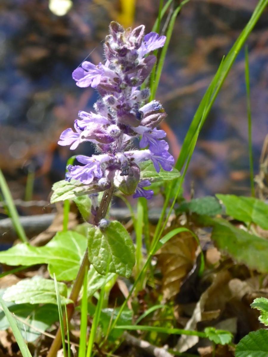 Pause avec les fleurs autour du Lac de Bagnoles.