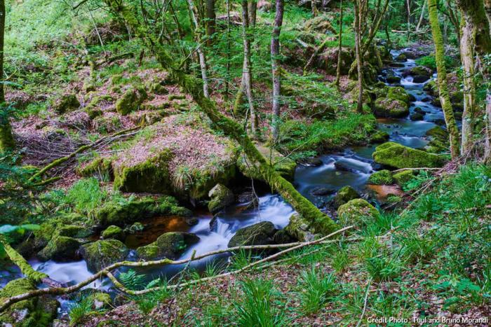 Le Morvan : le plein d'oxygène entre lacs et forêts
