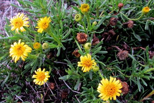 Des fleurs sauvages jaunes
