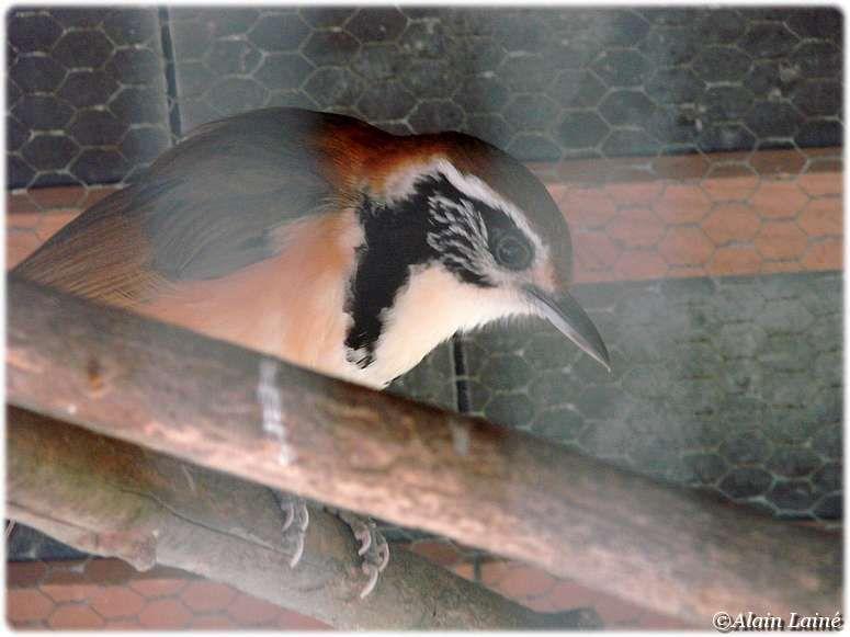 Parc_ornithologique_17Juil09_33