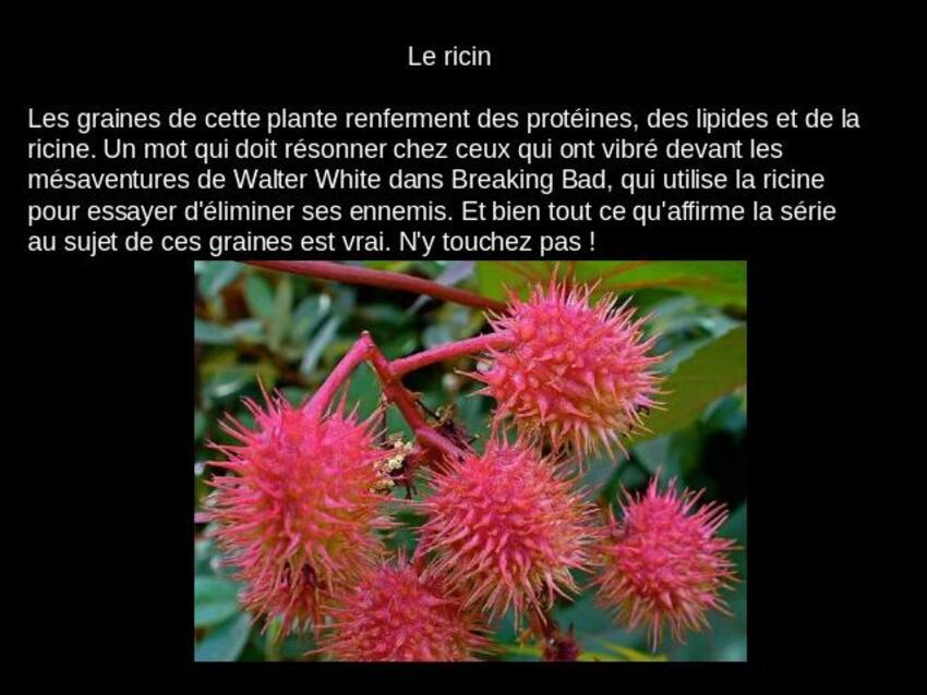 dans nos Jardin il y a des plantes très belles mais Toxiques même quelquefois dangereuses,il faut bien connaitre ces plantes