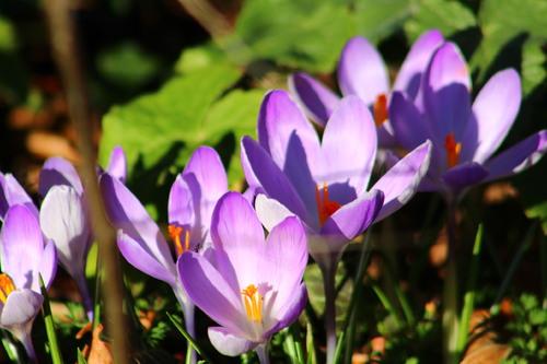 Le printemps avant l'heure