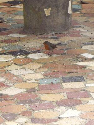 partage du mois de février : les oiseaux et/ou les anges
