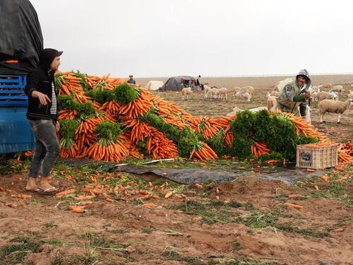ramasseurs et laveurs de carottes