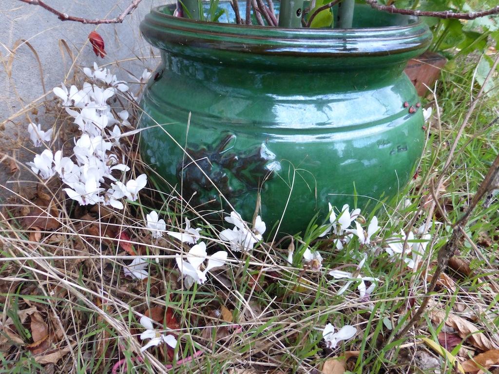 LONGUE PAUSE  dans mon jardin d'automne.