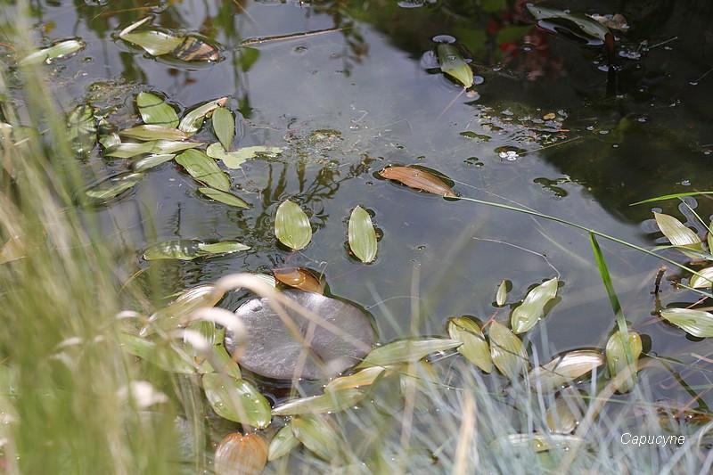 Les histoires d'eau du jardin...