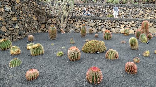 Lanzarote : Jardin des cactus