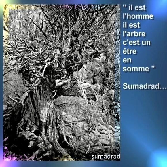 Arbre de Sumadrad 1 Marc de Metz 12 06 2011