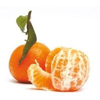 Oranges Mandarine Pamplemousse