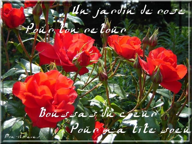 Rose pour ton retour