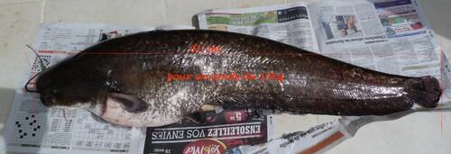 Pêche au lac Amance