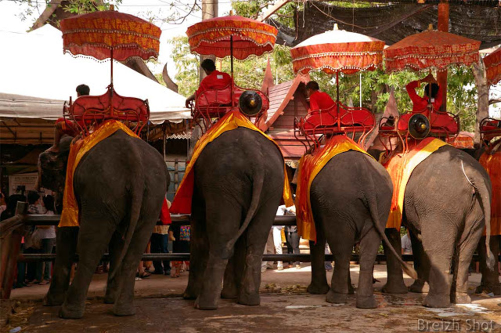 Ayutthaya le parc aux éléphants