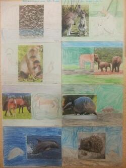 Notre exposition d'arts visuels sur le thème des animaux