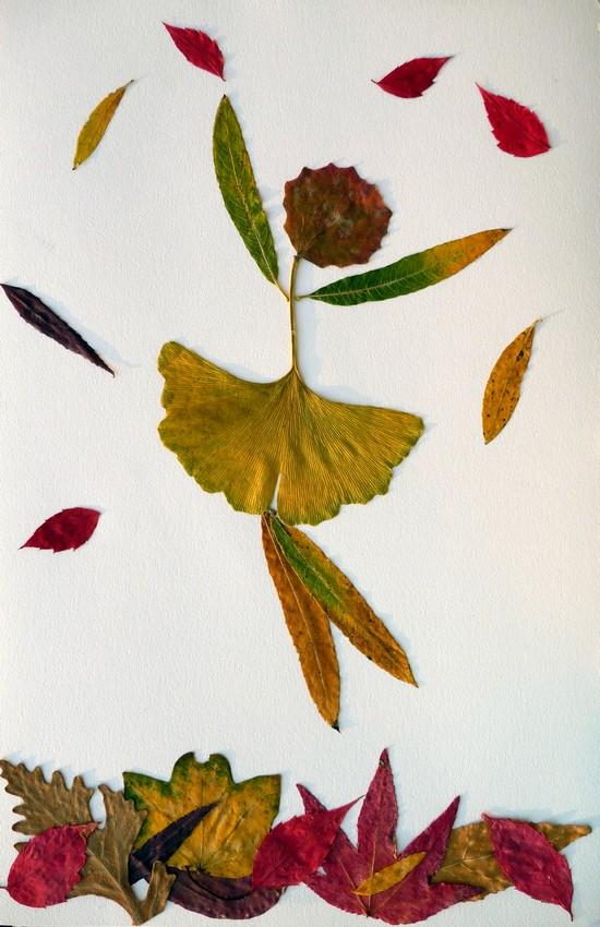 Le bel herbier de Yann