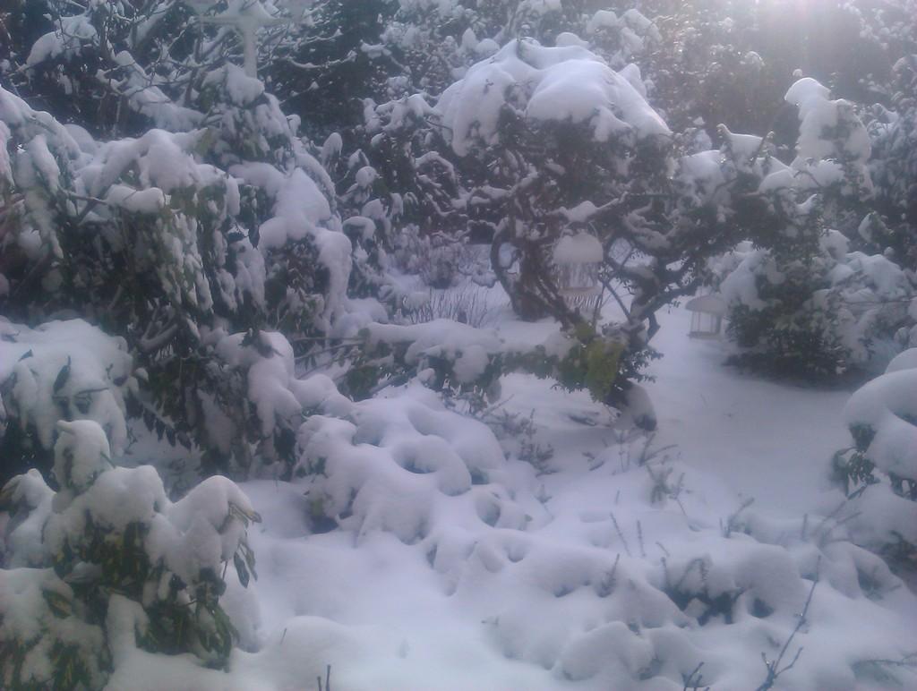 La première grande neige chez moi à Béthune