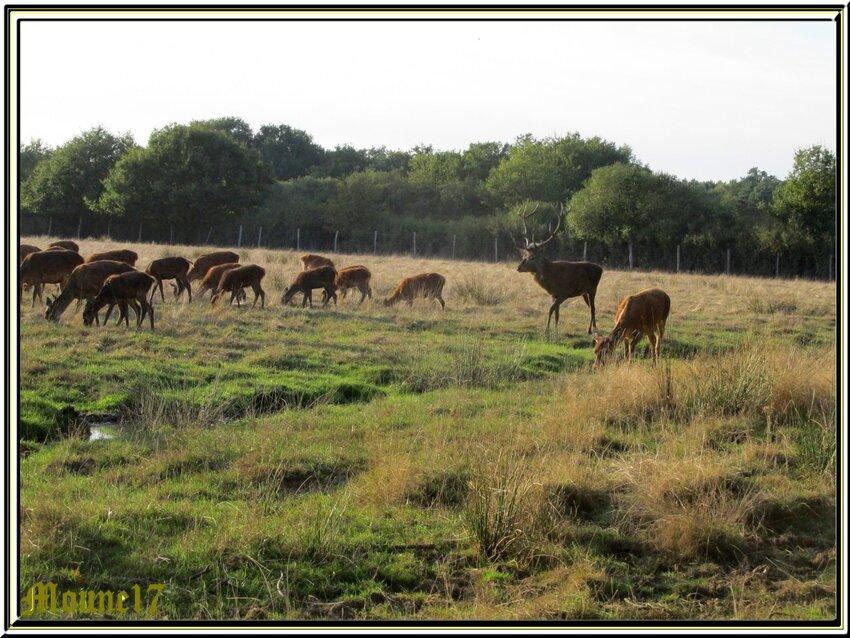 Visite au domaine de Ciran en Sologne pour le Brame du cerf