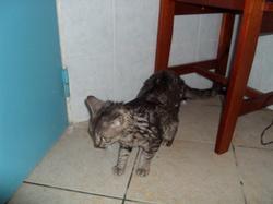 Le chat d'Ociane