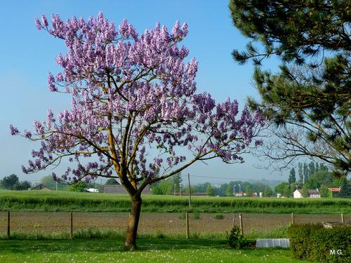 Les fleurs du jardin de Michèle ... n3
