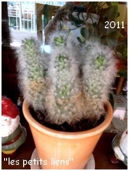 cactees-2011-6b.jpg
