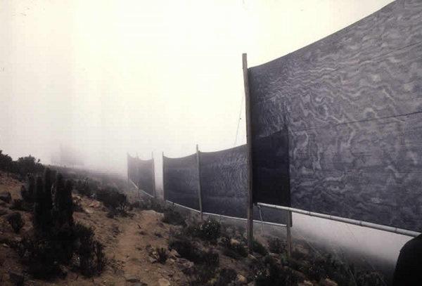 Les filets à nuages permettent de capter dans leurs mailles le brouillard, les nuages ou la brume, donc de l'eau potable pour boire et arroser dans une région aride.  JPEG - 38.1ko