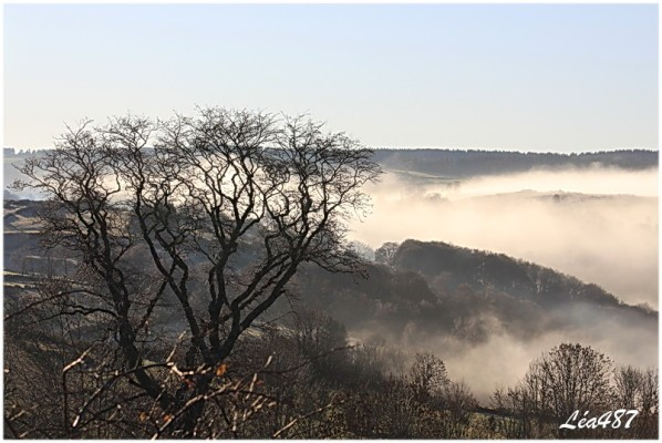 Ciel---temps-8251-arbres-brouillard.jpg