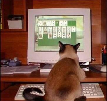 Mésaventures de chats
