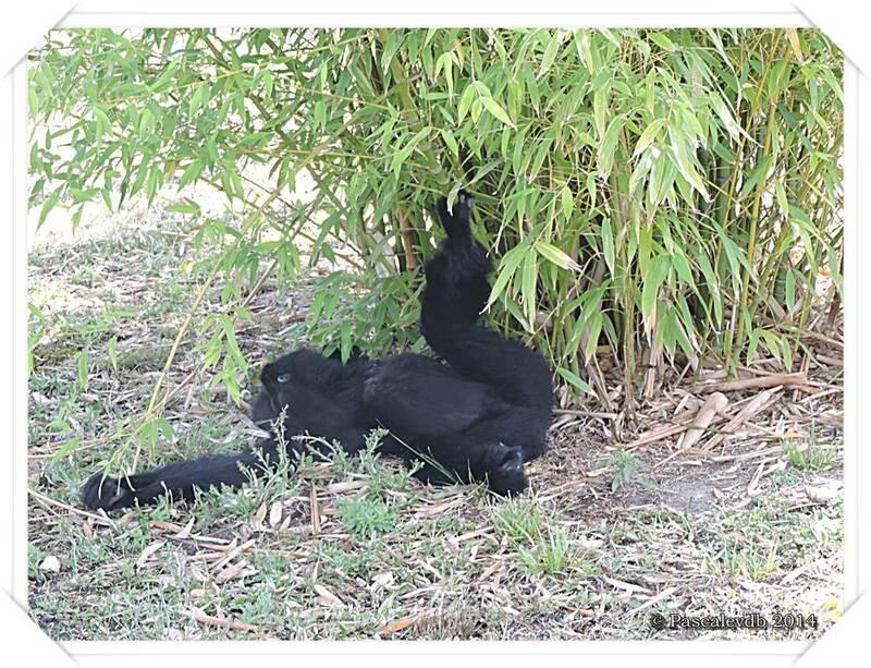 Zoo du Bassin d'Arcachon à La Teste de Buch - 2/20