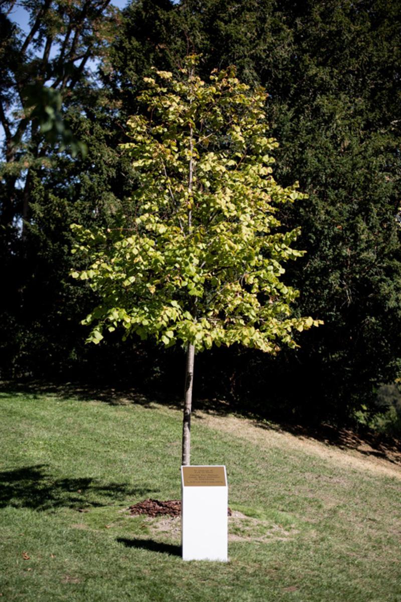 Plantation d'un arbre en l'honneur du Prince Charles