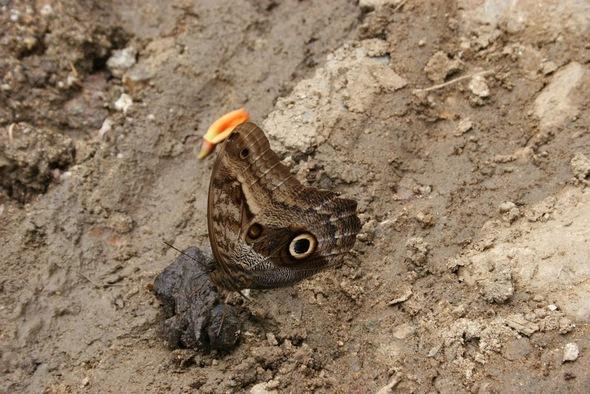 un joli papillon;