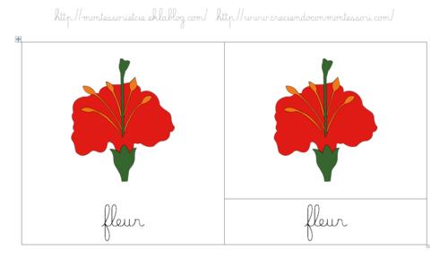 Les différentes parties de la fleur