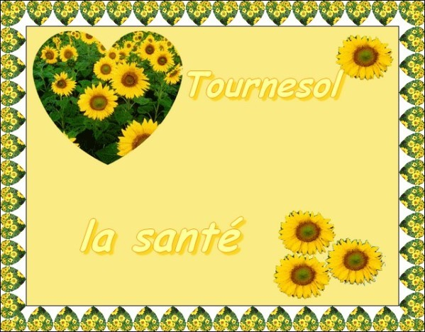 Tournesol.jpg