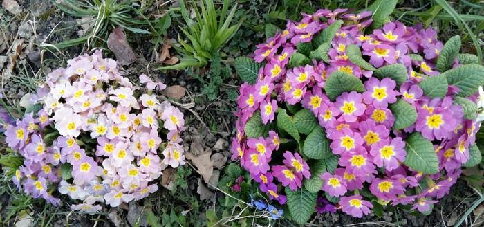 Le printemps est arrivé, premières fleurs