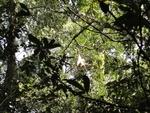 Khao Yai : immersion dans la jungle thaïlandaise