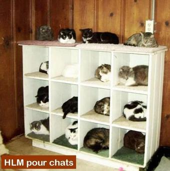 HLMpourChats