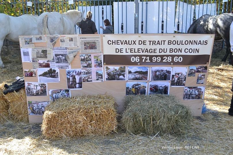 Rambouillet : La Saint Lubin - les 15ème Comices agricoles : Chevaux de traits