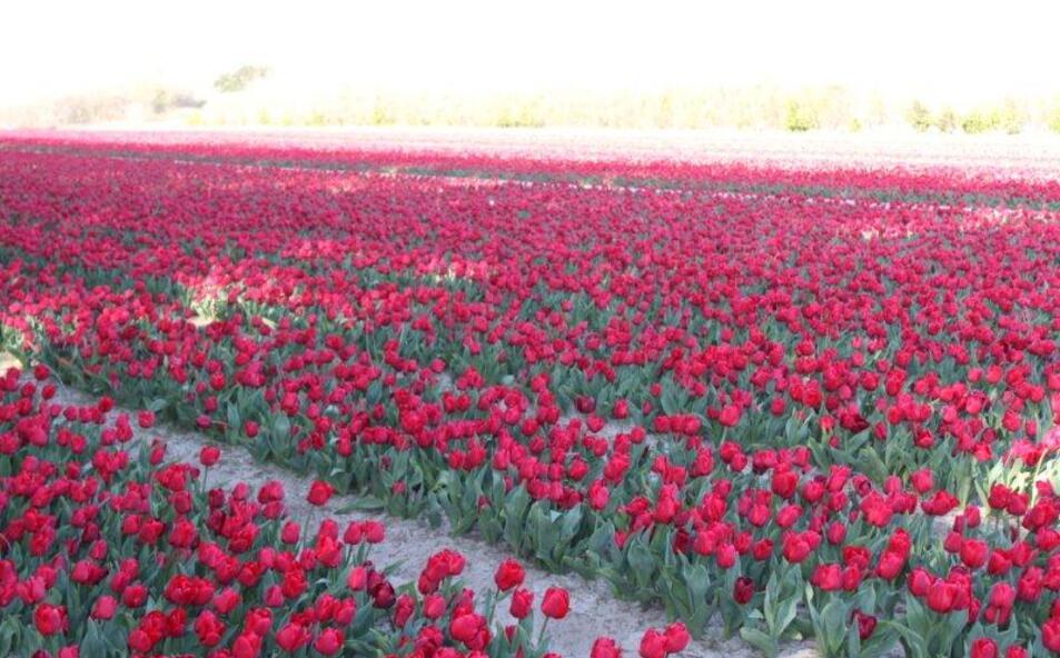 Fleurs jardin et La Torche 098