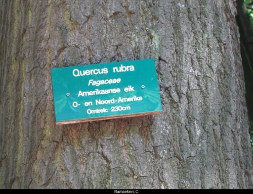 Un arbre de la forêt pour mille défis...